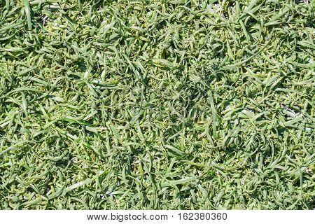Green Fake Grass Background
