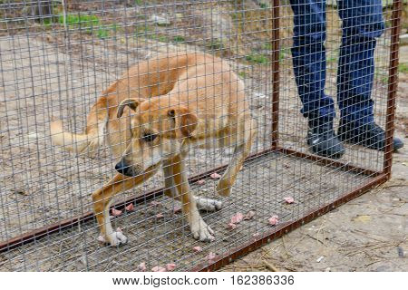 Street stray red dog in transport cage.