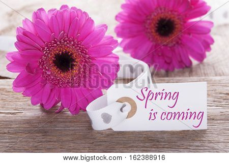 Label With English Text Spring Is Coming. Pink Spring Gerbera Blossom. Vintage, Rutic Or Aged Wooden Background. Card For Spring Greetings.