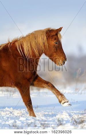 Red horse with long blond mane do trick