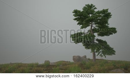 3d illustration of the lonely pine-tree on grassy hill