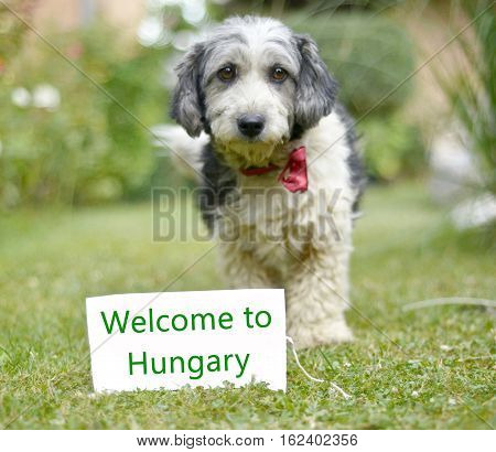 picture of a The cute black and white adopted stray dog on a green grass. focus on a head of dog. Text welcome to hungary