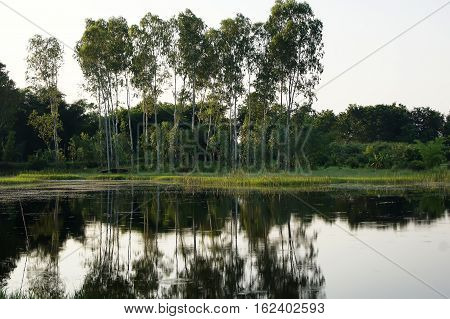 Big Trees Along The River And The Lake