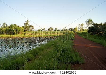 The Rough Road Grass Covered Up The Lake