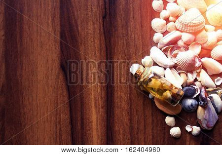 Background with sea cockleshells on a wooden substrate. Effect of a soft sunlight