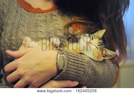 Little callico cat with spotted fur lying in the arms of a girl. The kitten is sleepy; it squints in joy and relaxation and holds its paws above the girl's hands