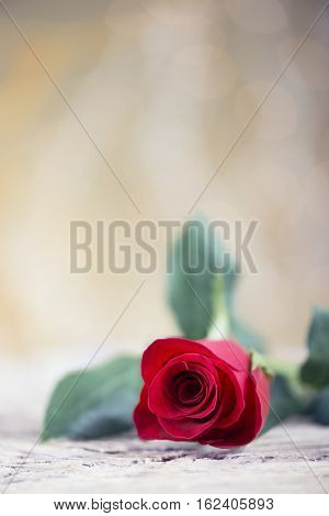 Love background with red rose