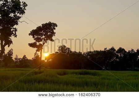 Abstract soft blurred and soft focus the silhouette of the sunset with the reproductive stage brown paddy rice field and the beautiful sky and cloud.By the beam light and lens flare effect tone.