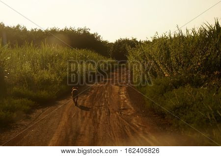 The Dog Is Running On A Rough Road In Farm