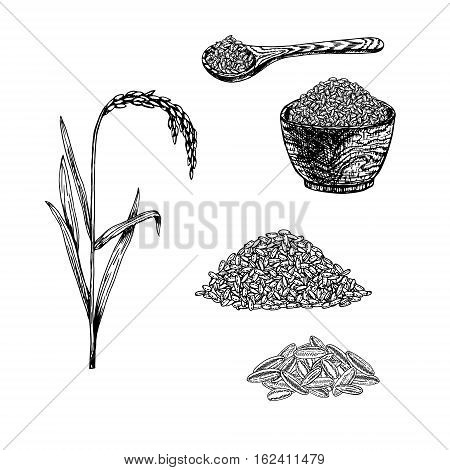 Hand drawn set of rice. Retro sketches isolated. Vintage collection. Linear graphic design. Black and white spoon and plate with rice. Plant rice. Vector illustration.