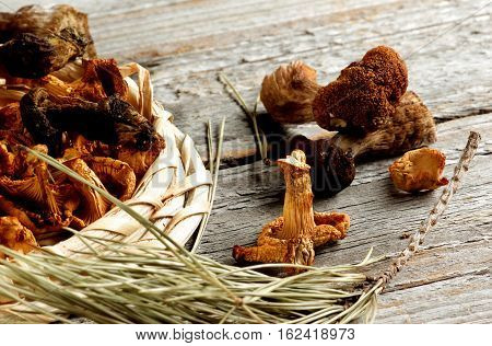 Arrangement of Forest Dried Mushrooms with Chanterelles Porcini Boletus Mushrooms and Dry Fir Branch closeup on Rustic Wooden background. Focus on Chanterelle