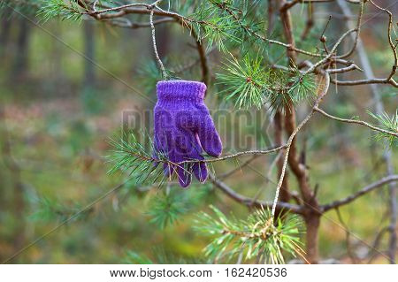 glove on a branch lost a glove a purple glove on the tree