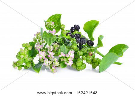 fresh malabar spinach or Ceylon spinach isolated on white background