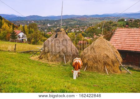 Autumn rustic landscape in Carpathian mountains,  Transylvania, Romania