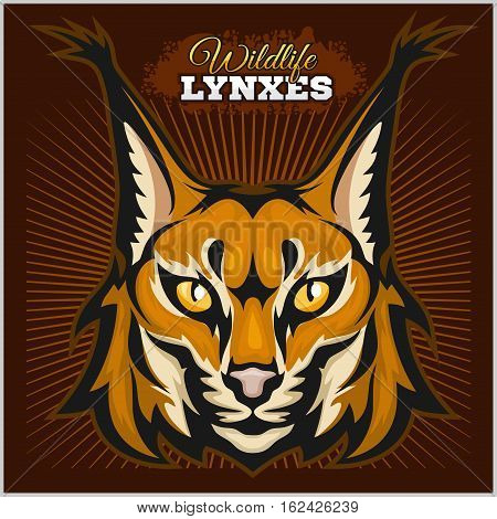 Lynx mascot logo. Head of lynx on dark background vector illustration.