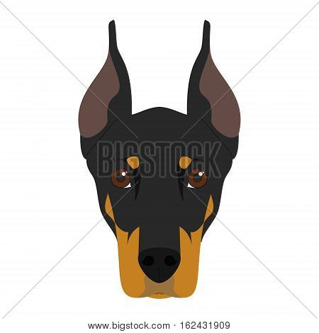 Doberman dog isolated on white background vector illustration