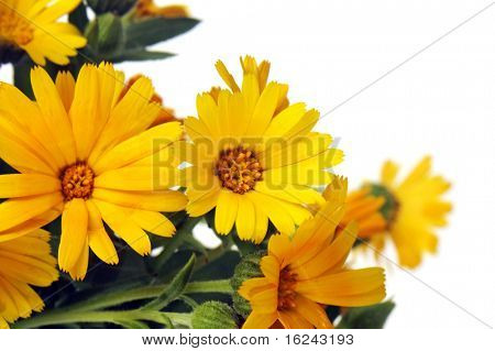 closeup of a bunch of wildflowers isolated on a white background