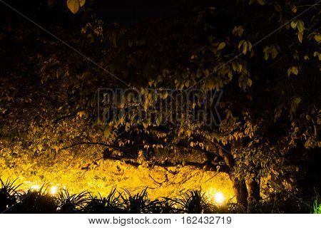 Branches and autumn leaves illuminated by lampposts creating a dark zone