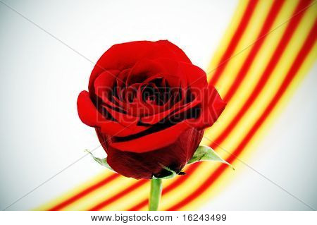 a red rose with the senyera, a catalan tradition for the roses day poster