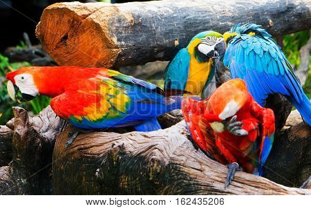 large Group of colorful parrot in the wood.