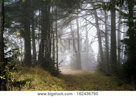 Woodland Trail In A Misty Landscape