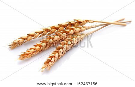 Wheat isolated on white close up .