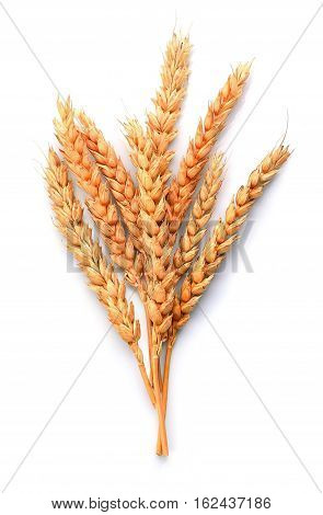 Wheat isolated on white backgrounds close up .