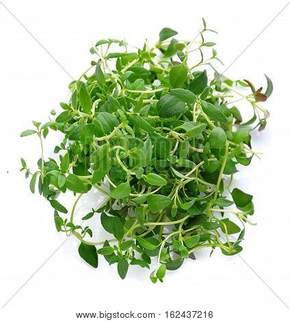 Thyme fresh herb isolated on white background .