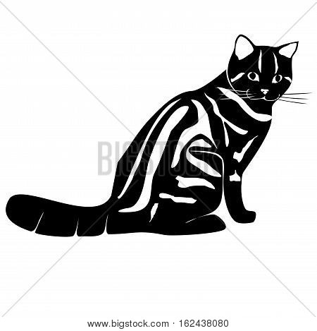 monochrome sitting black cat, siluette, isolated, black and white, vector, isolated on white,