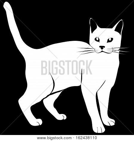 realistic white cat on black, siluette, isolated, black and white, vector, monochrome