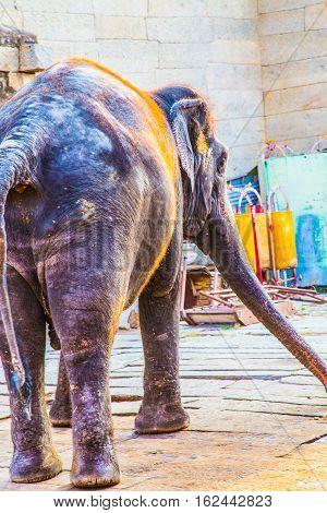 Holy Indian Elephant in Hampi, India, Karnataka