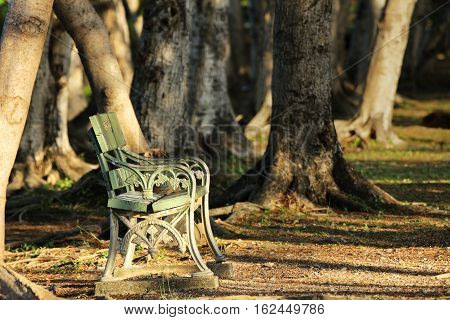 Lonely Chair under Sunshine in the Woods