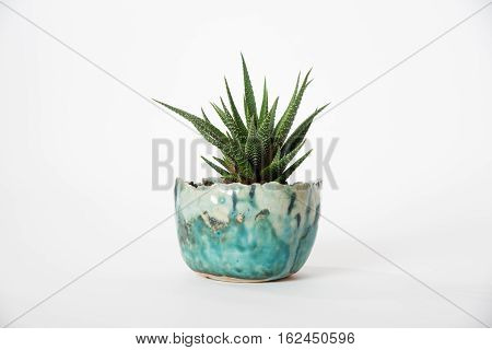 Succulent plant in blue planter on white