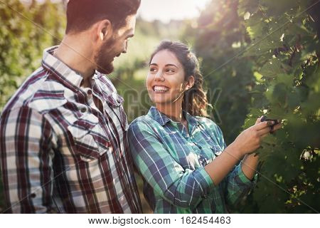 Happy young winegrowers working in vineyard at summer