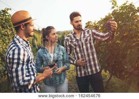 Wine Grower Showing Grapes