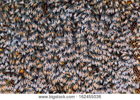 Close up view of bees on honeycomb - stock photo
