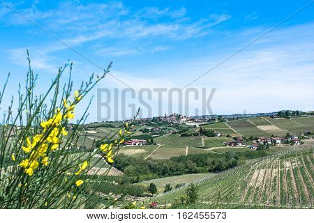 View of vineyards and fields in Langhe region, Italy