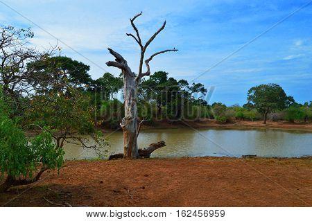 lake, tree, wilderness, sky, red earth, swamp safari