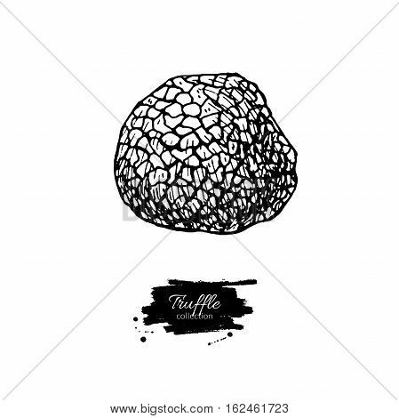Truffle mushroom hand drawn vector illustration. Sketch food drawing isolated on white background. Organic vegetarian product. Great  for menu, label, product packaging, recipe
