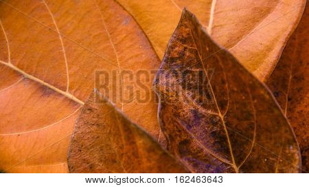 Dry leafs with different combination tree leafs