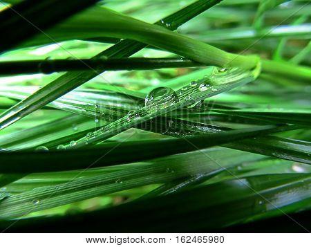 Macro Photography, Water Drops, Grass, Magical, Green, Dew-Drops