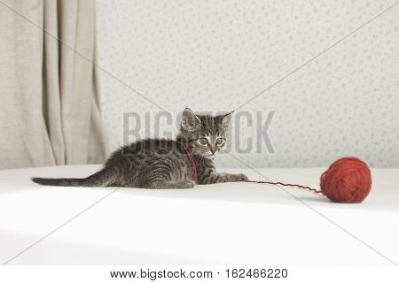 Kitten Plays With Tangle Of Thread