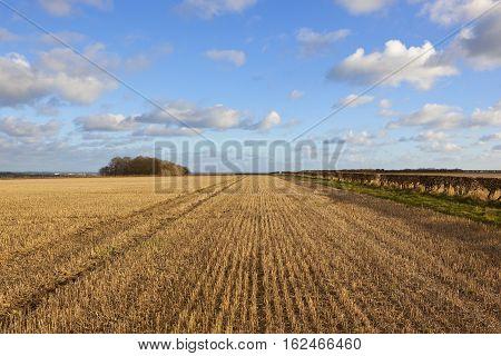 Hilltop Stubble Field