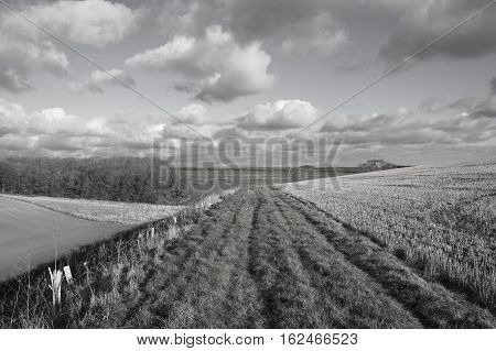 Footpath In Farmland