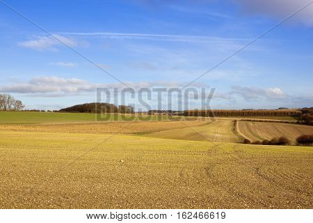 Cultivated Farmland