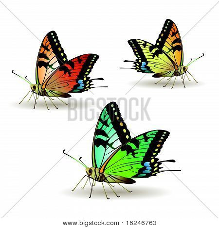 Butterfly collection isolated on white