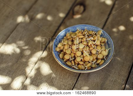 Plate of fresh lentils sprouts. Raw food. Vegan. Healthy lifestyle. Wooden background. Selective focus. Copy space