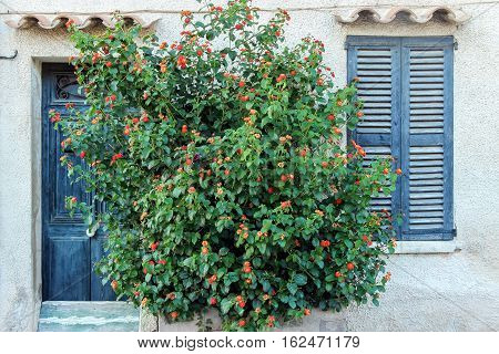flower bushes with window on the wall
