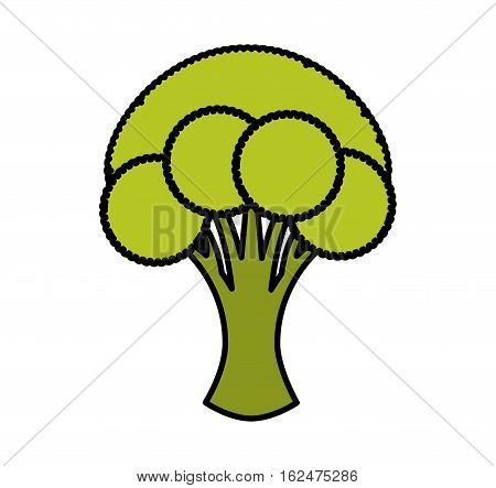 broccoli fresh vegetable isolated icon vector illustration design