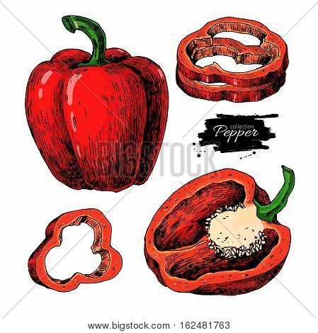 Pepper hand drawn vector set. Vegetable Isolated object: full, half and slices bell pepper. Detailed vegetarian food drawing. Farm market product. Paprika icon
